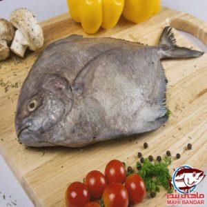 ماهی حلوا سیاه