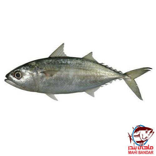 کباب ماهی طلال ماهی طلال | فروشگاه اینترنتی ماهی بندر