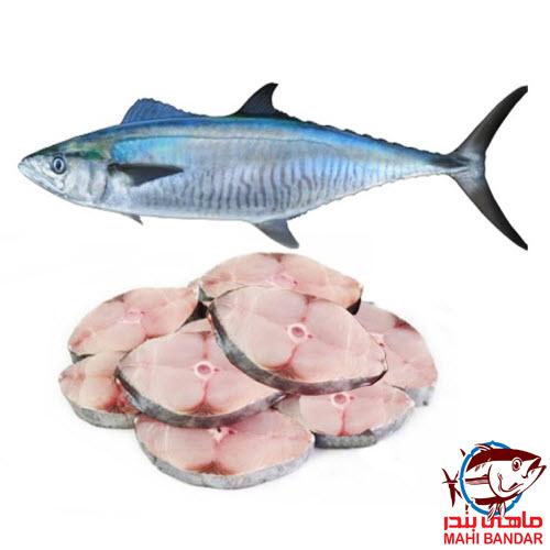 ماهی شیر