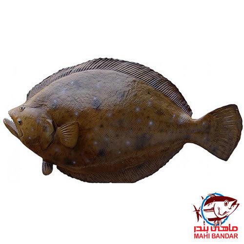 ماهی کفشک