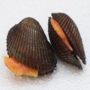 صدف کاکل cockle