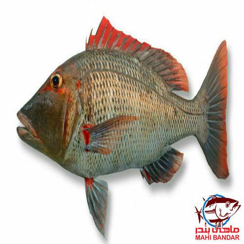 ماهی شعری